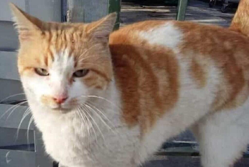 gatto liam macchie arancioni