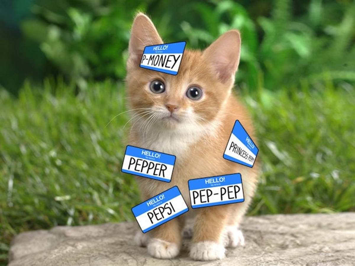 gatto con nomignoli
