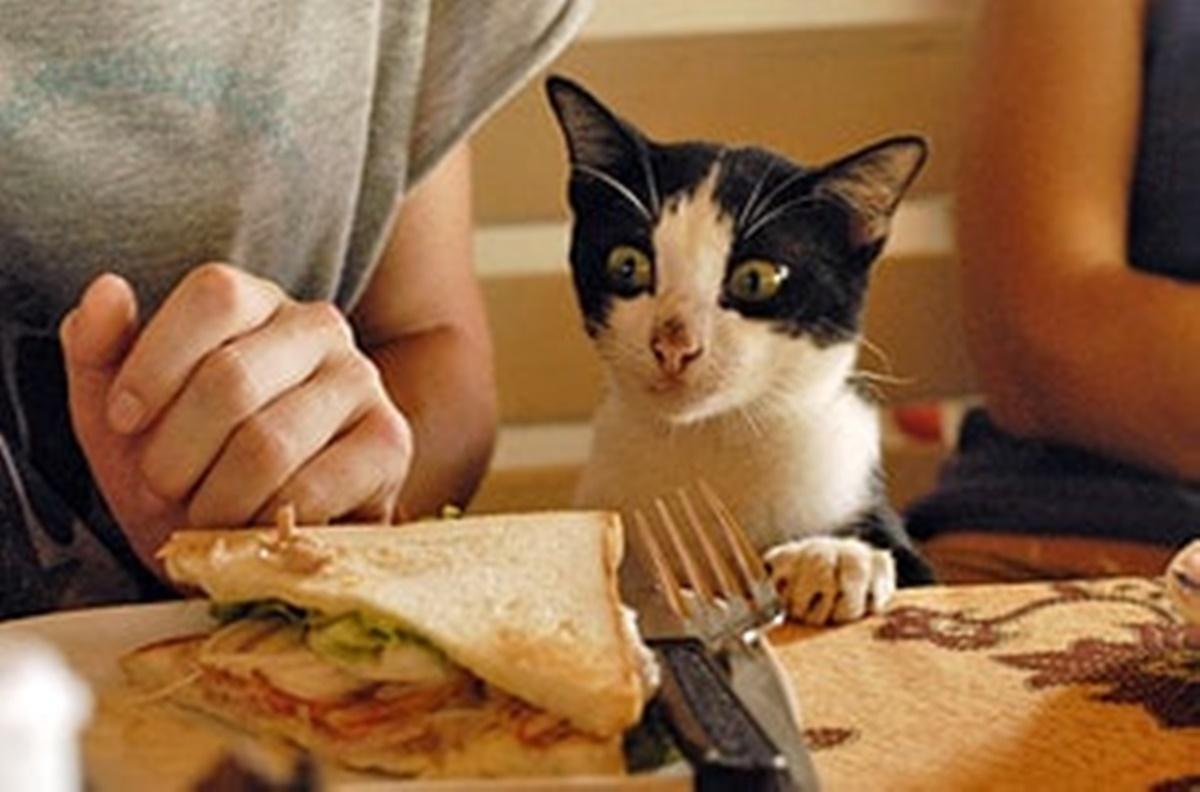 gatto vuole cibo
