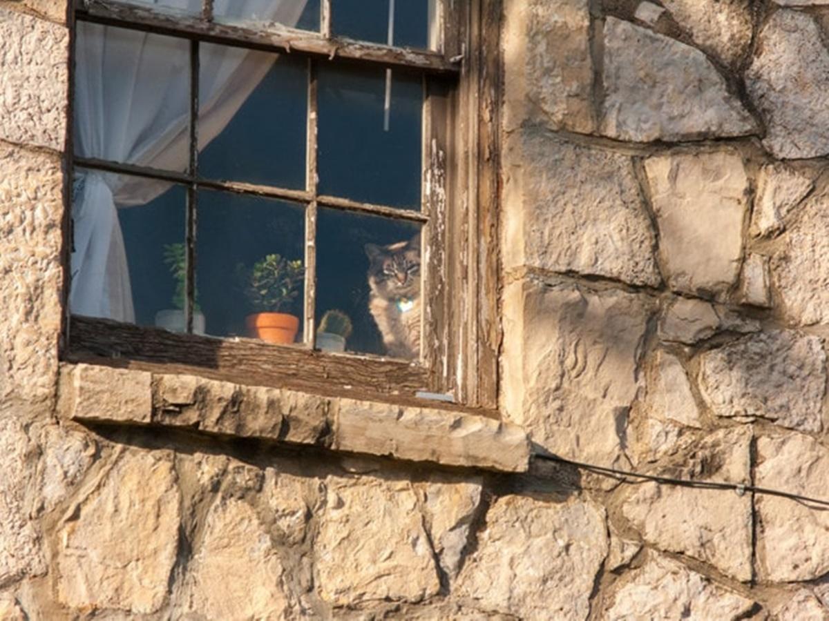 gatto guarda dalla finestra