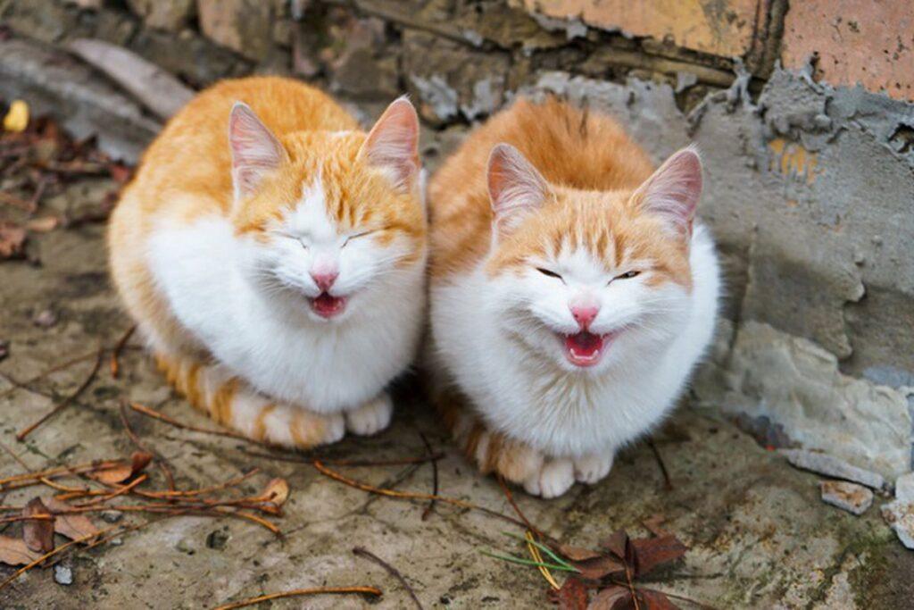 gatti fratelli