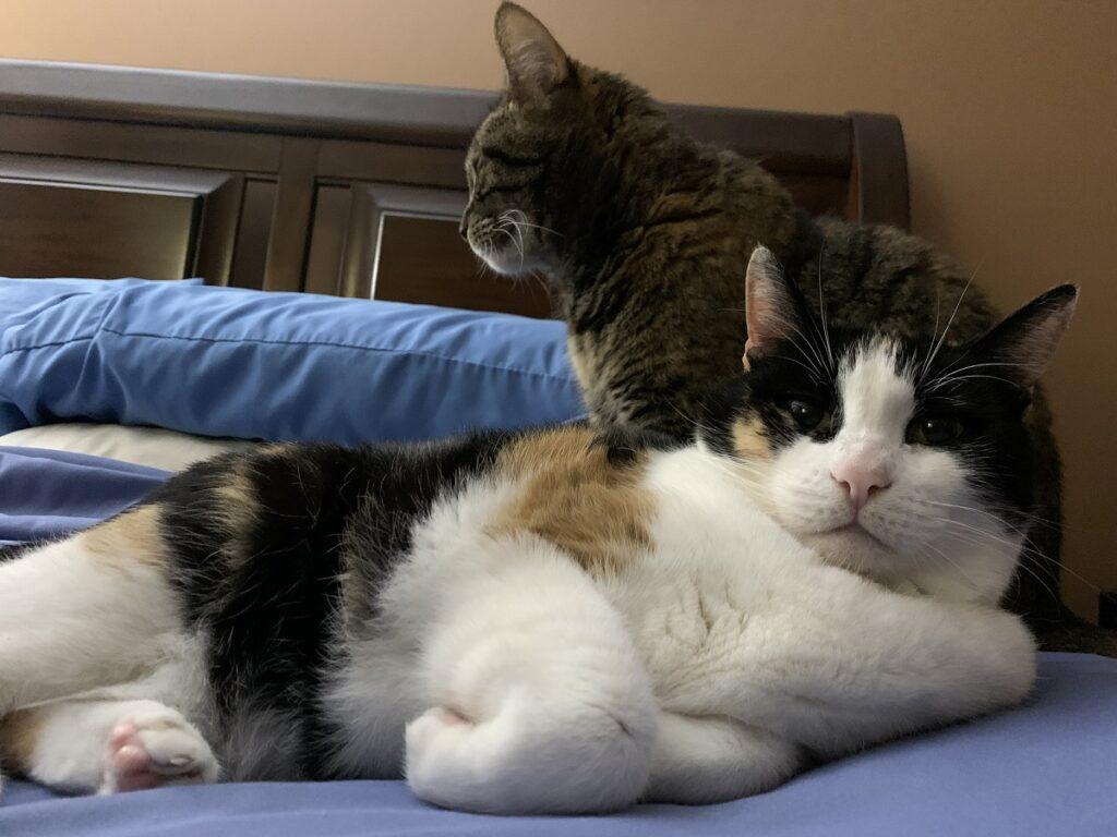 gatti amici pisolino