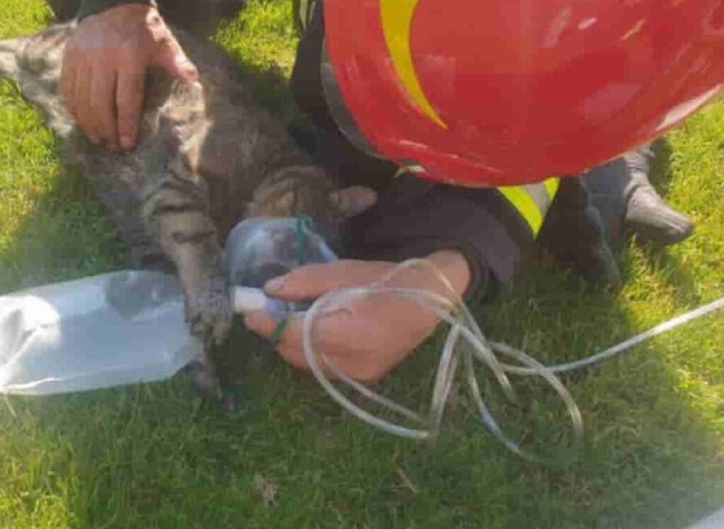 gatto sdraiato erba senza sensi
