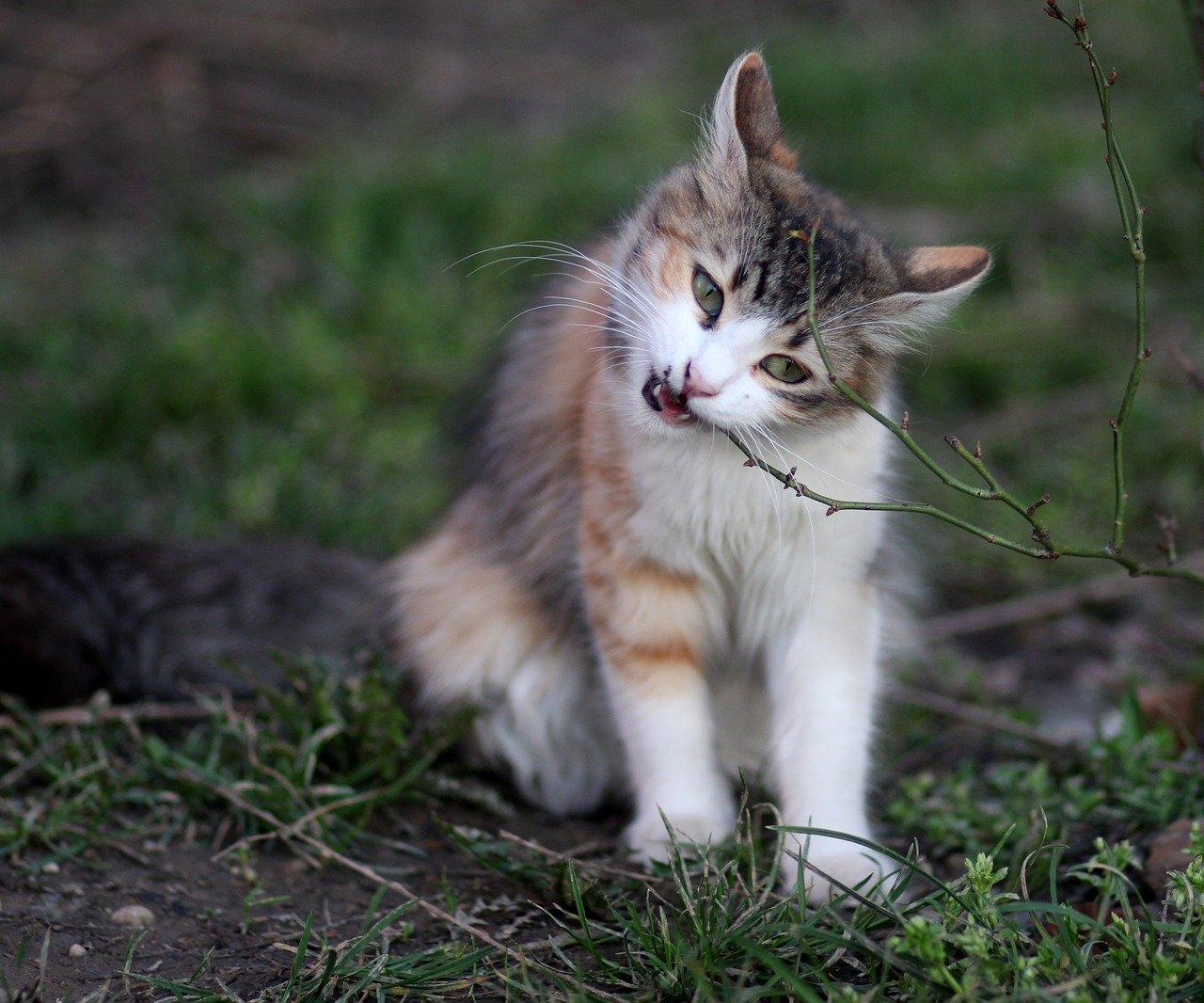 gatto mangia ramo
