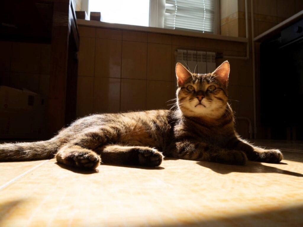 gatto relax casa