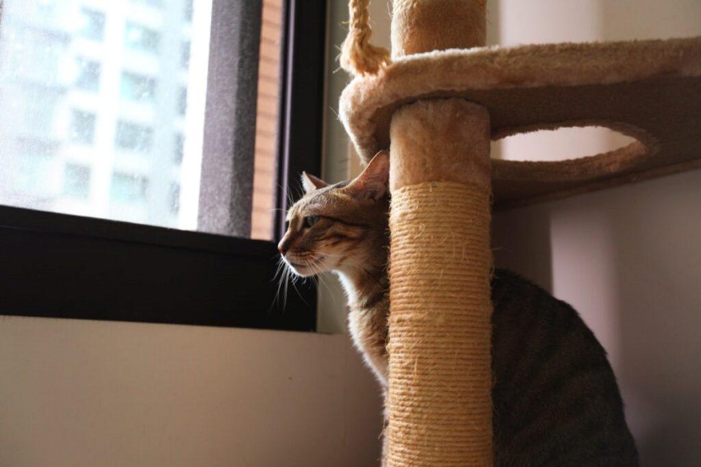 gatto tira graffi