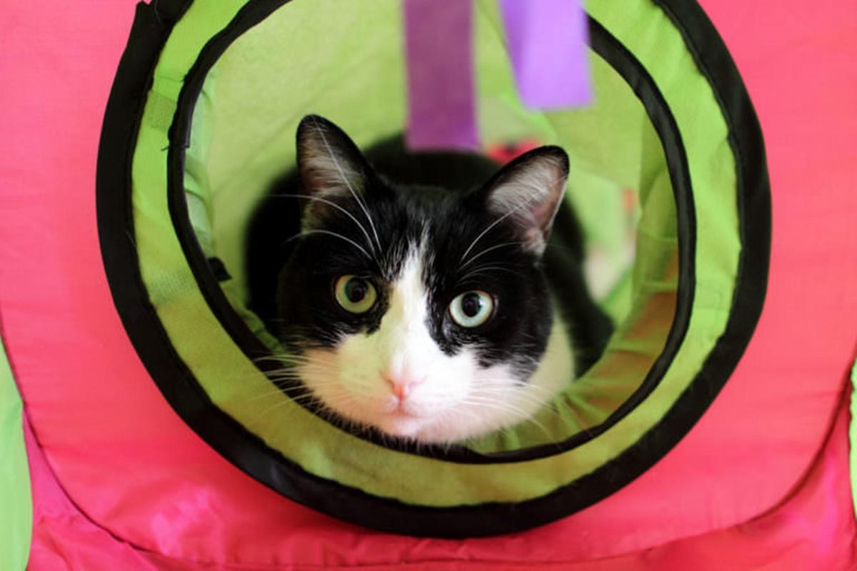 gatto nel tunnel