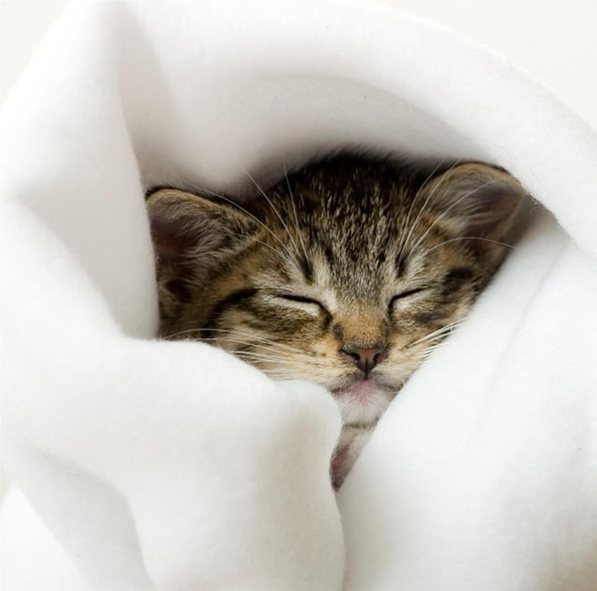 gatto nelle coperte