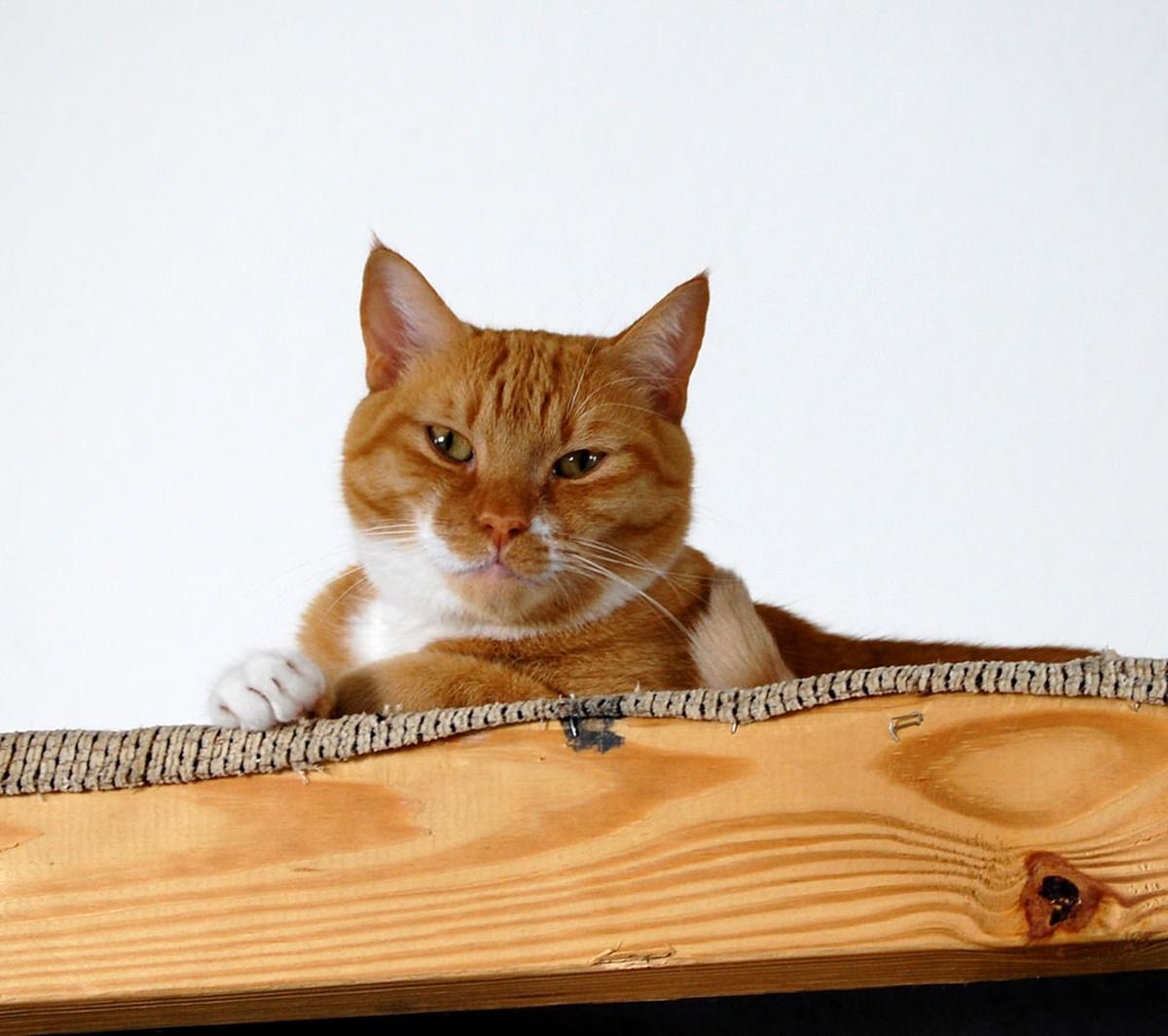 gatto nel legno