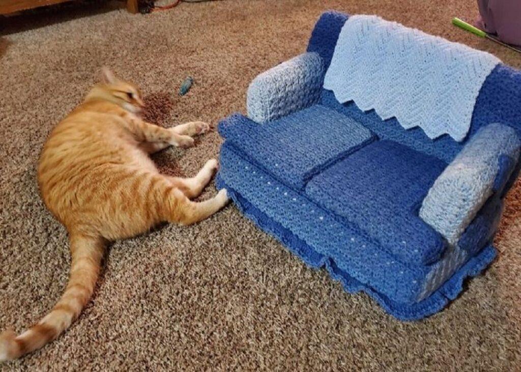 gatto divano rifiuta