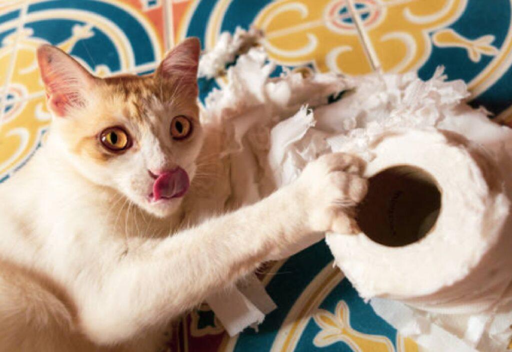 gatto carta igienica zampetta