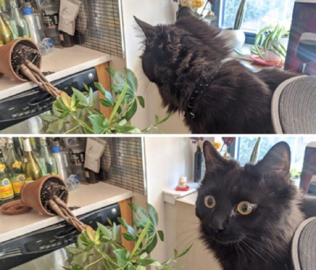 gatto vaso della pianta