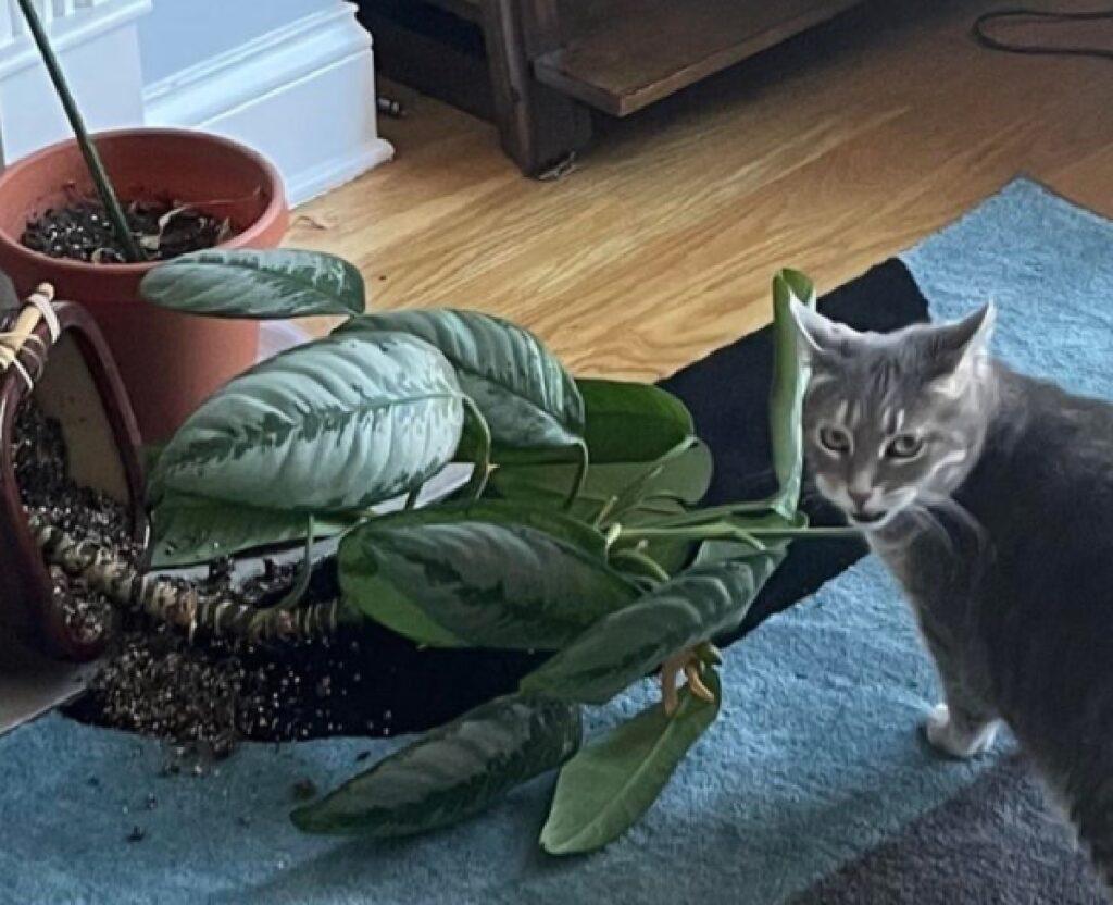 gatto pianta cade vaso per terra
