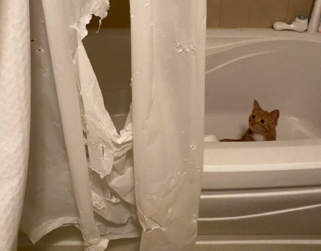 gatto distrugge tendina doccia