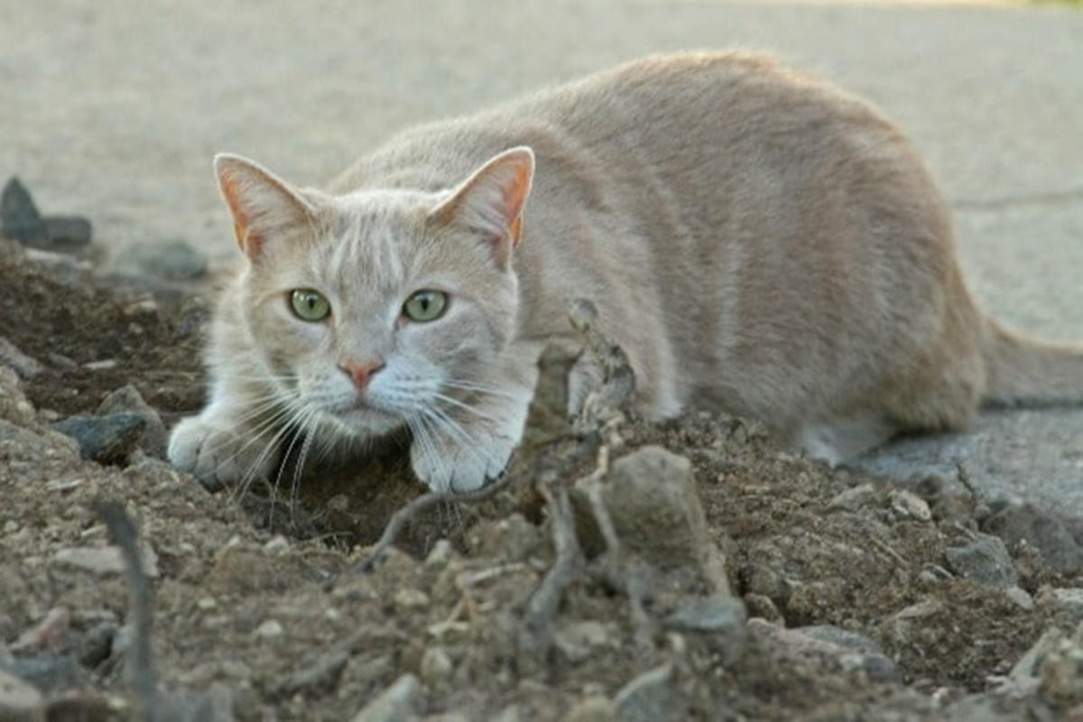 gatto striscia
