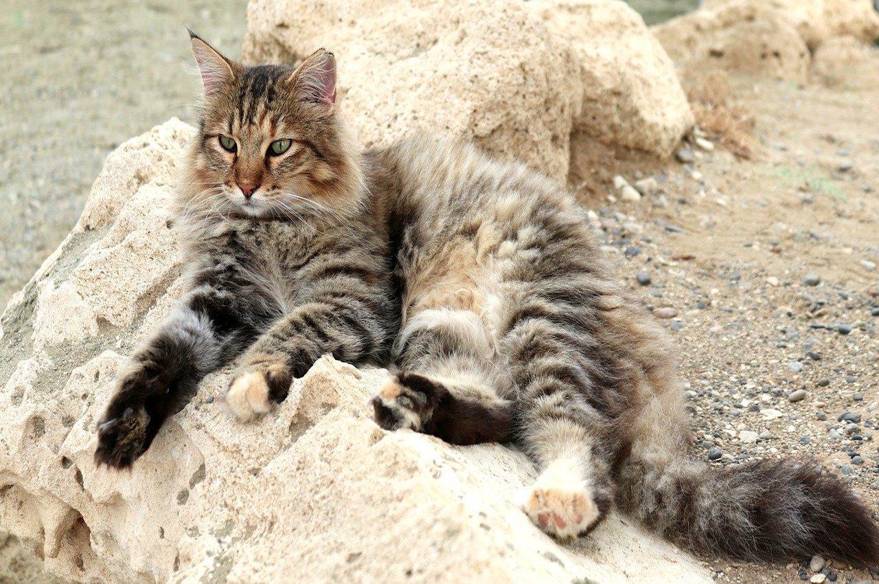 gatto in posa