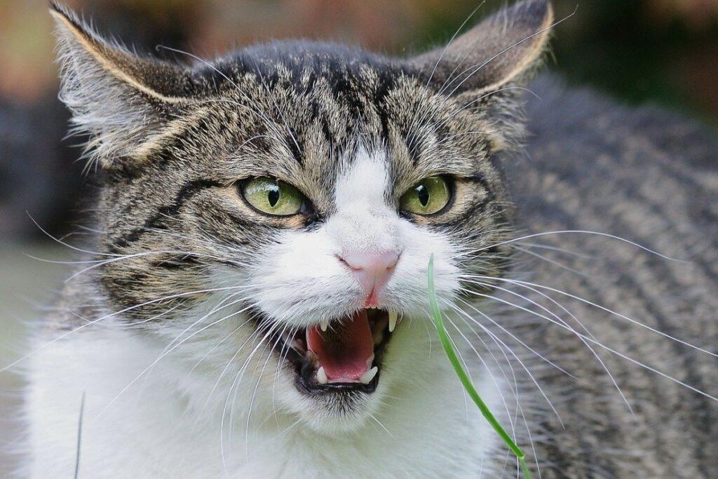 gatto sulla difensiva