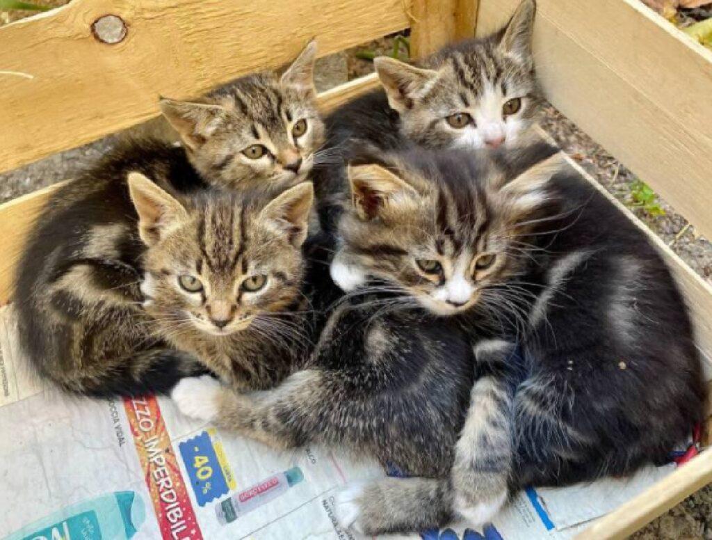 gatti dentro cassetta aspettano adozione