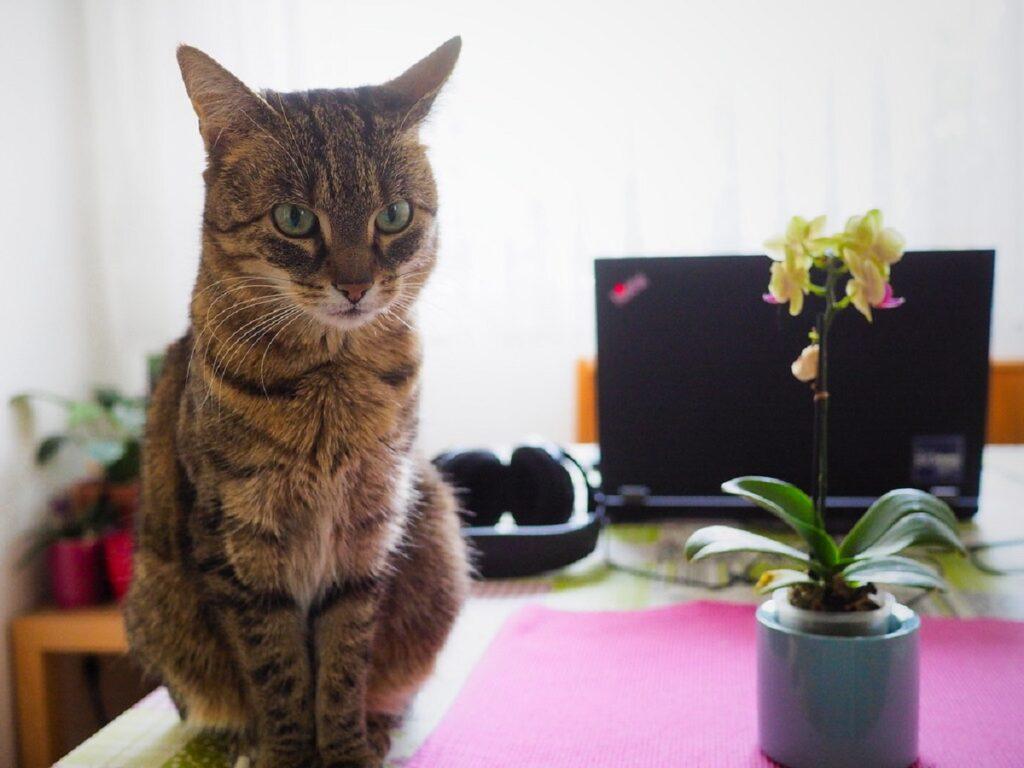 gatto vaso fiore