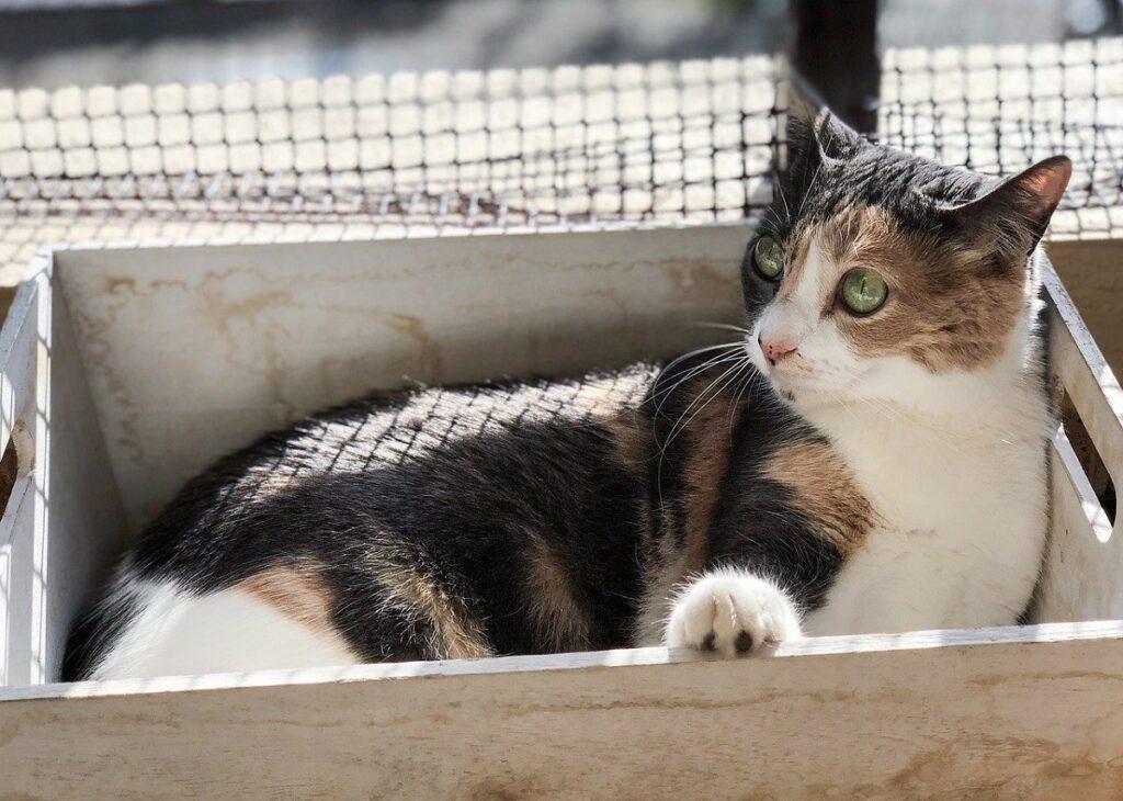 gatto cesta legno