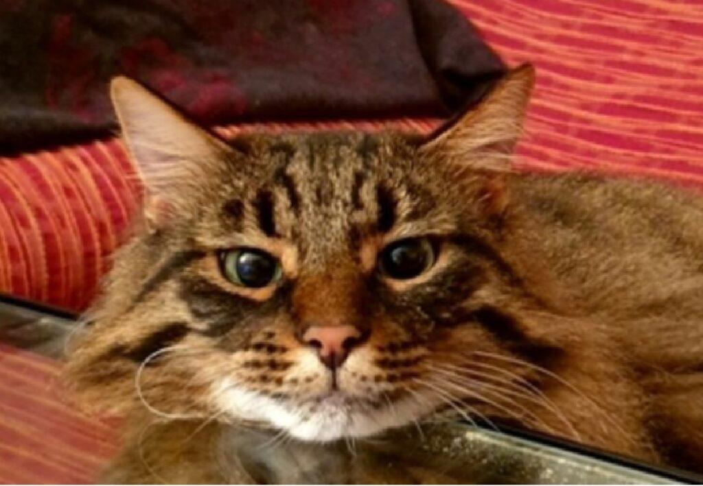gatto palmiro casa tavolino