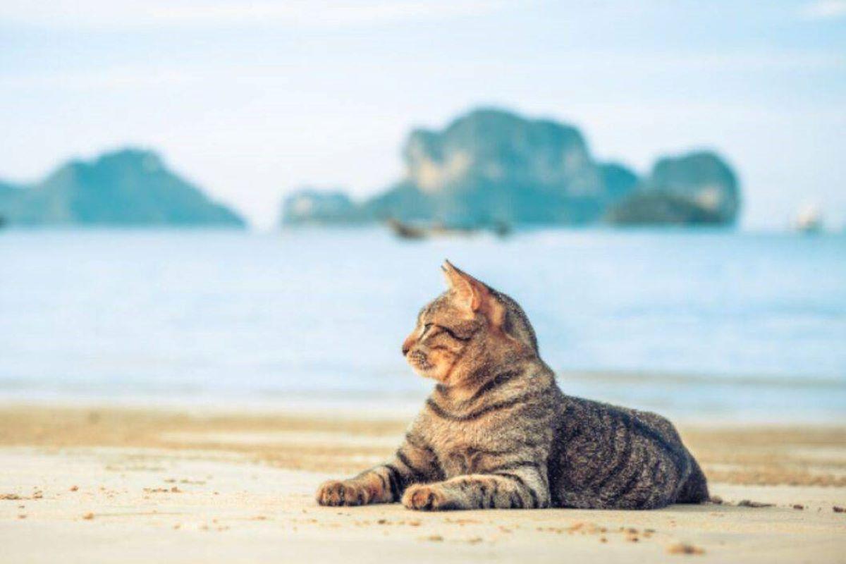 portare il gattino al mare