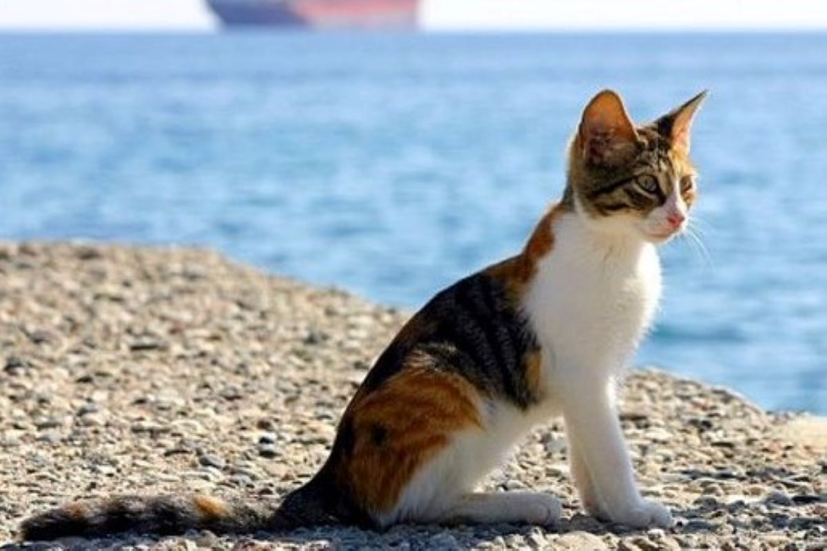 gattino al mare