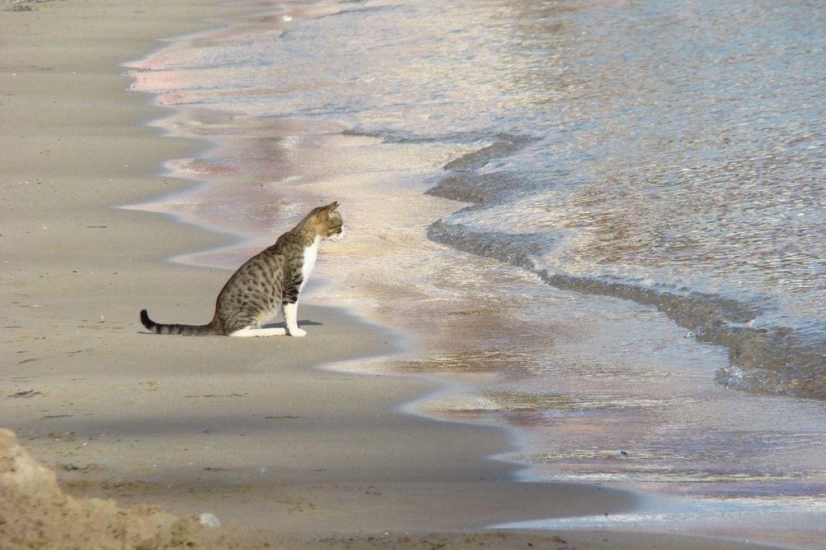 gattino guarda il mare
