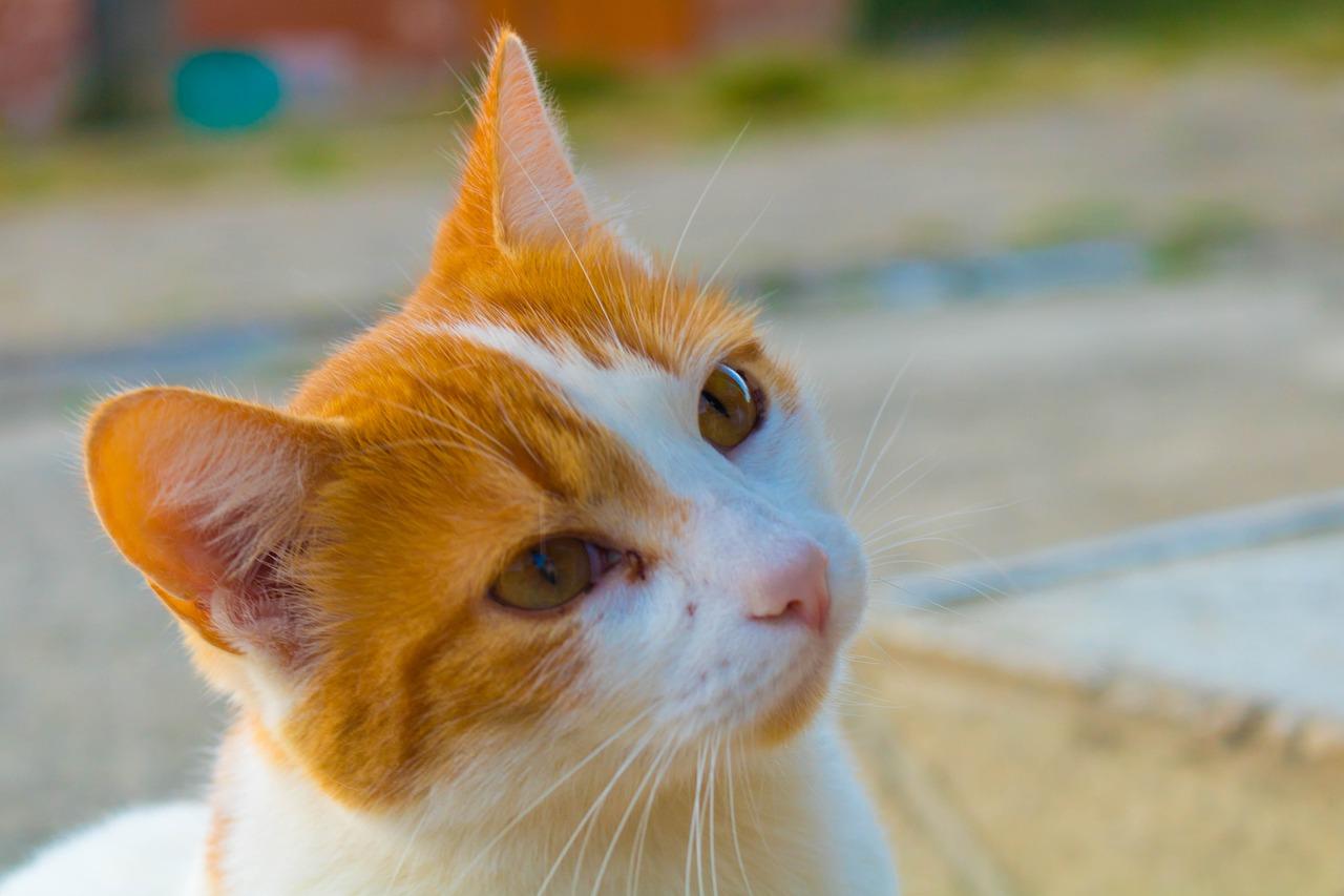 gatto cucciolo sguardo tenero