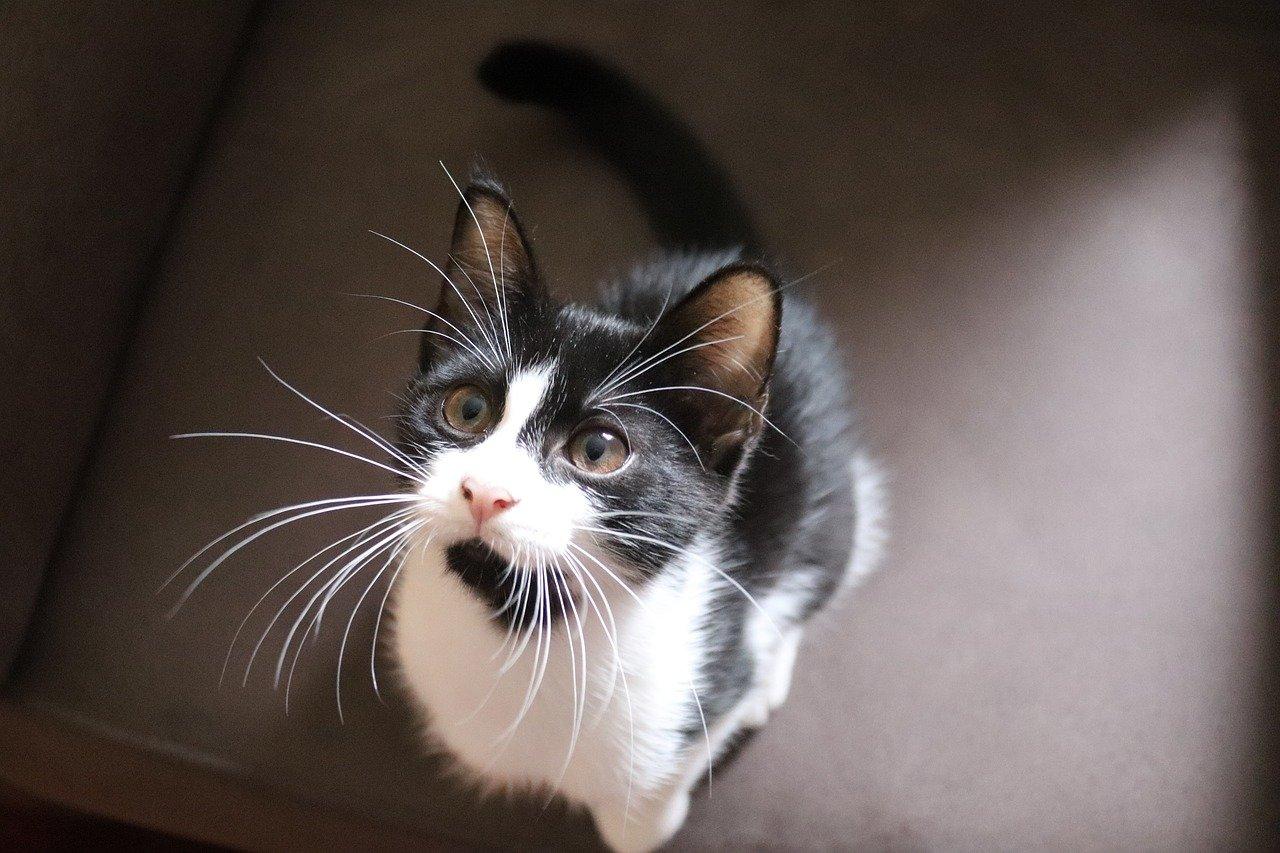 gatto piccolino