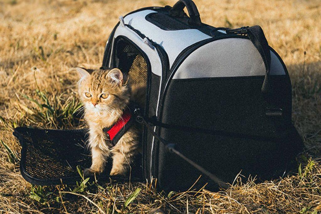 gattino pronto per una gita