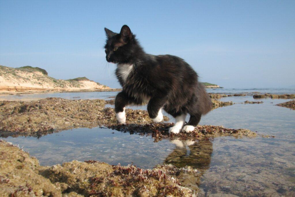 gattino sugli scogli al mare