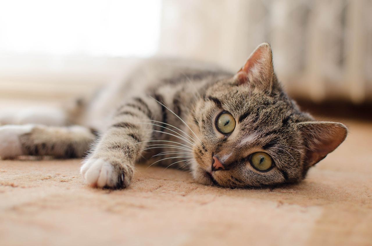 gattino rilassato a terra