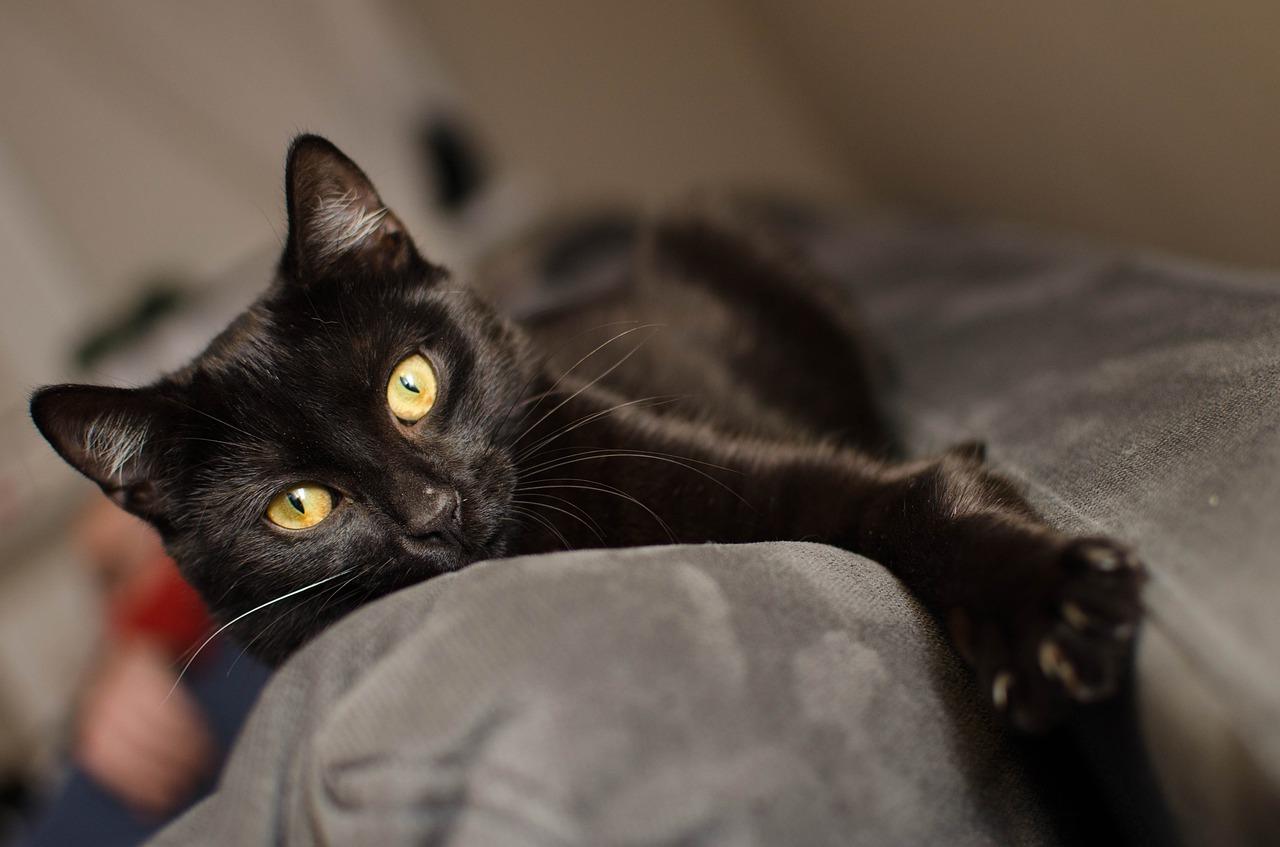 gatto sguardo profondo