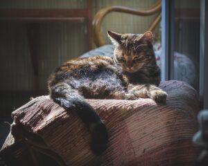 gatto sistemato sul divano