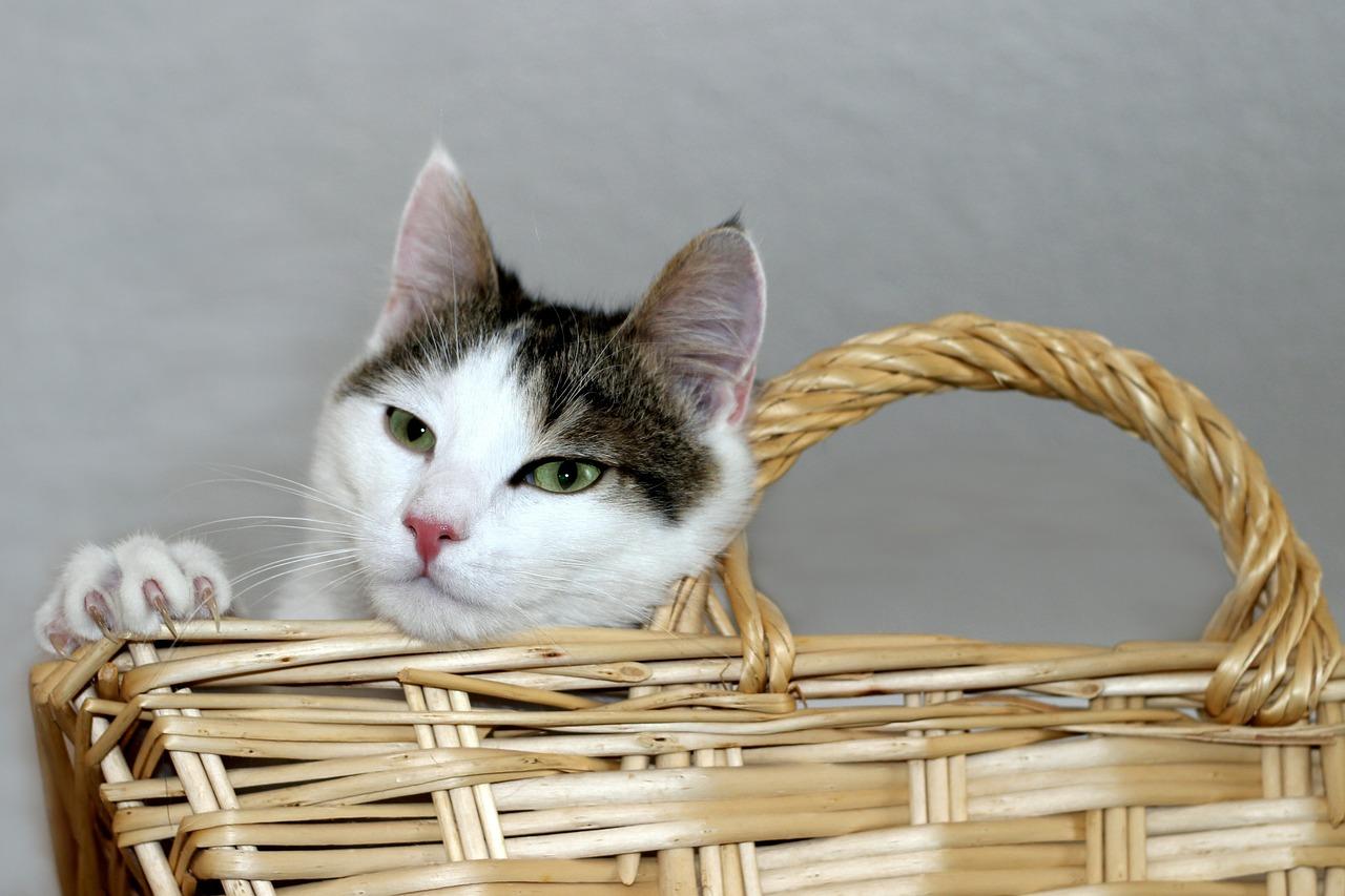 gatto nel cestino