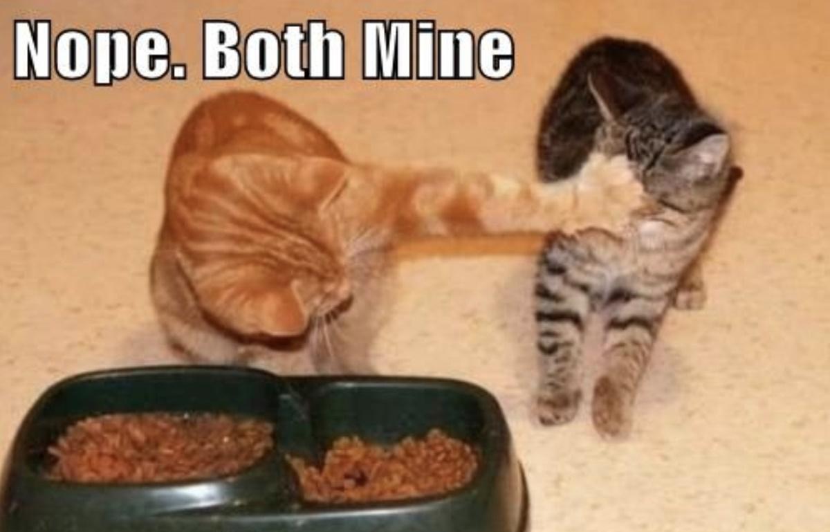 gatto insolente