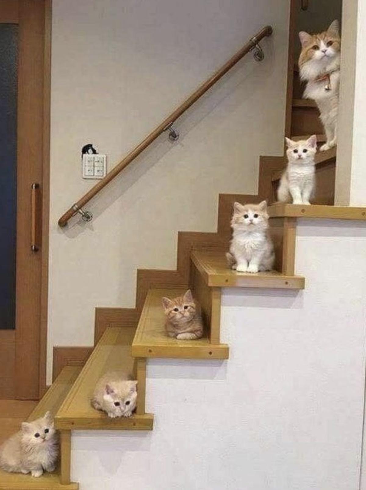 gattini sulle scale