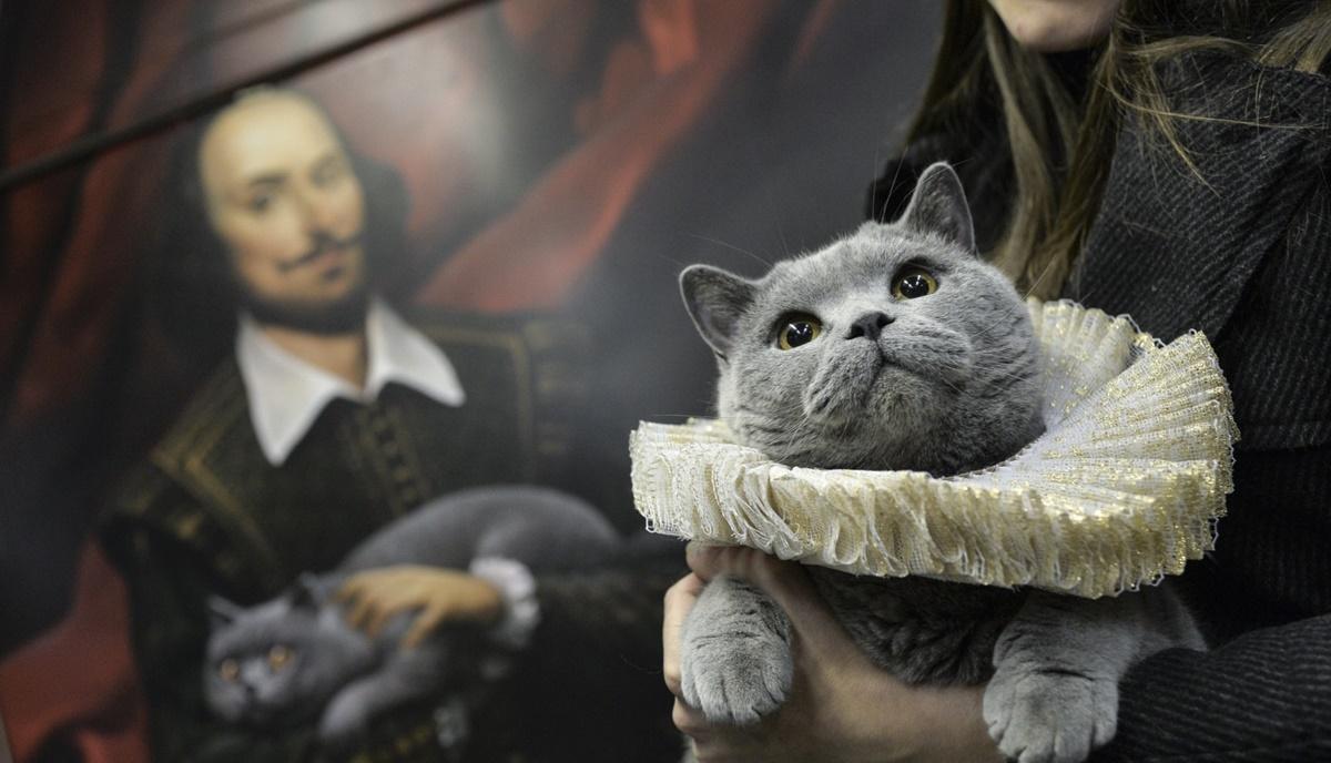 gatto teatro