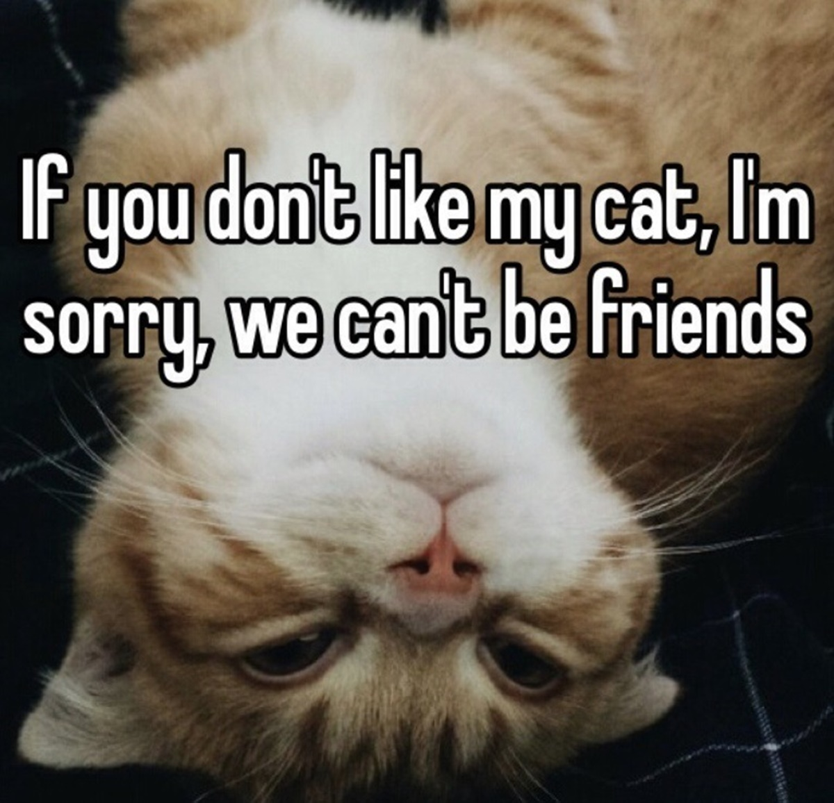 gatto amici