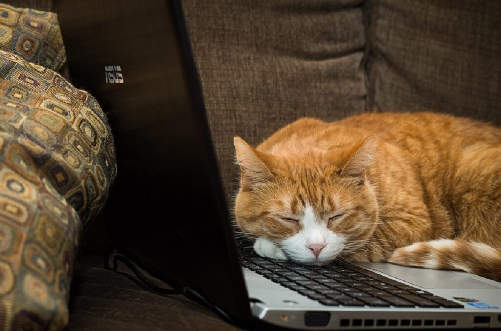 gatto riposa computer