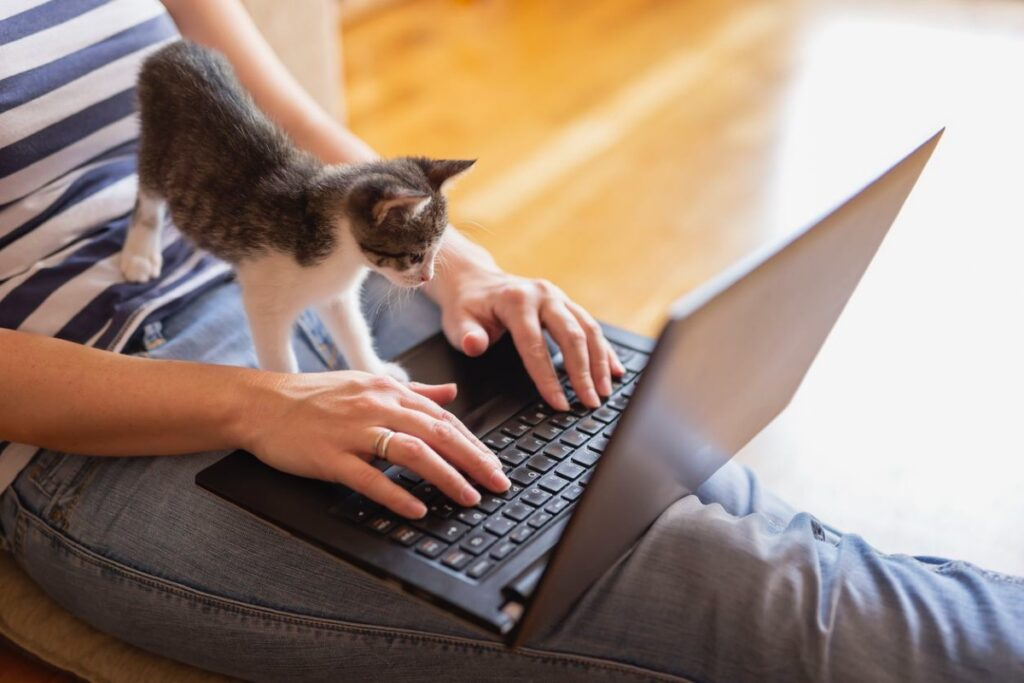 gattino sulle gambe del padrone