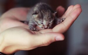 gattino appena nato in mano
