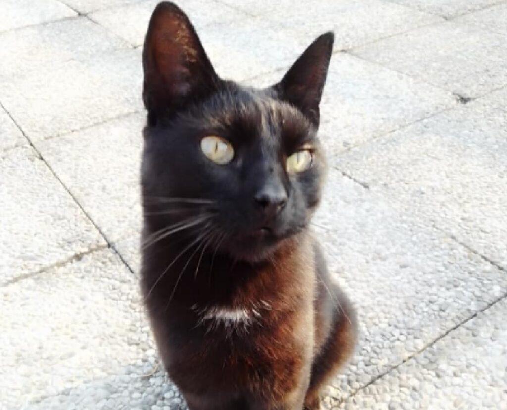 gatto nero piazza cittadina