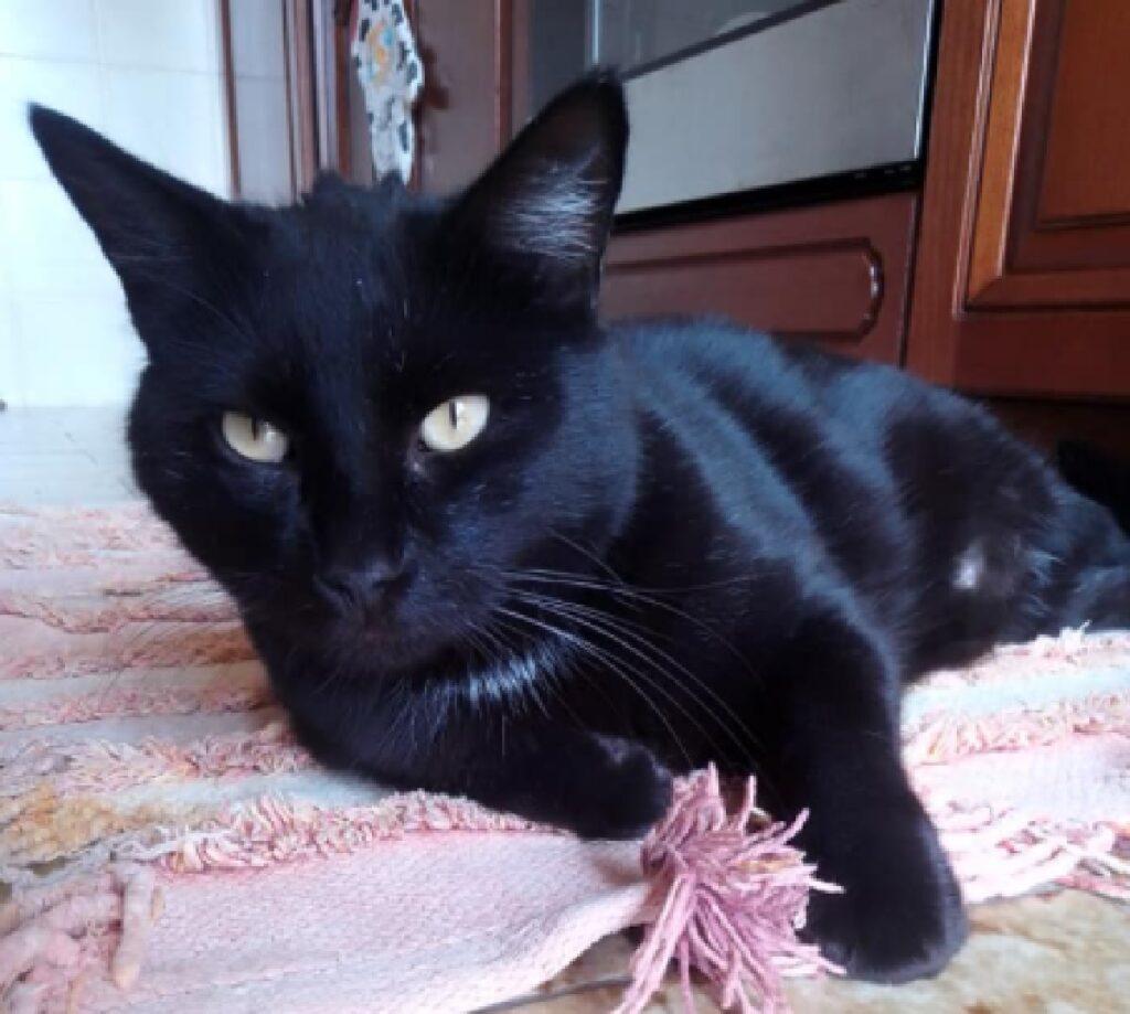 gatto nello è nero casa