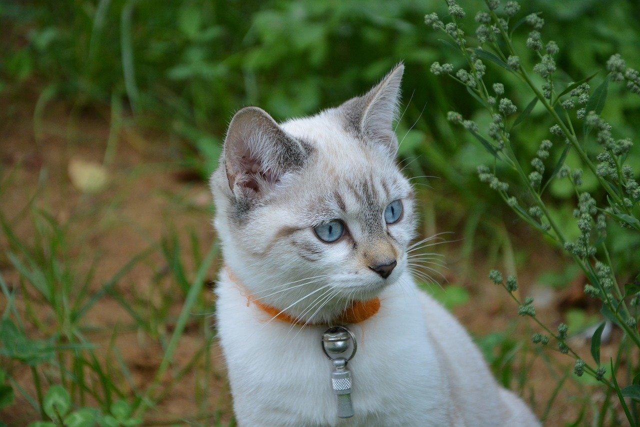 gatto occhi cielo