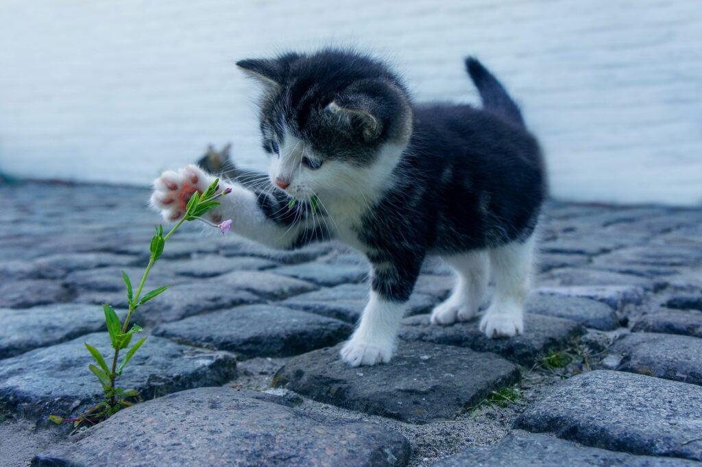 gattino gioca con un fiore