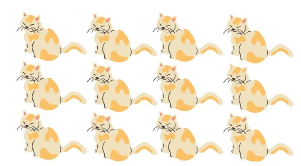 immagine gatti gialli test percezione