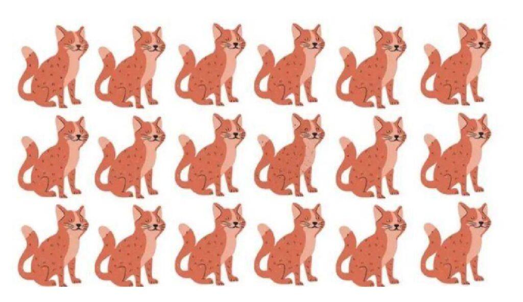 felini rossi e rosa colori simili