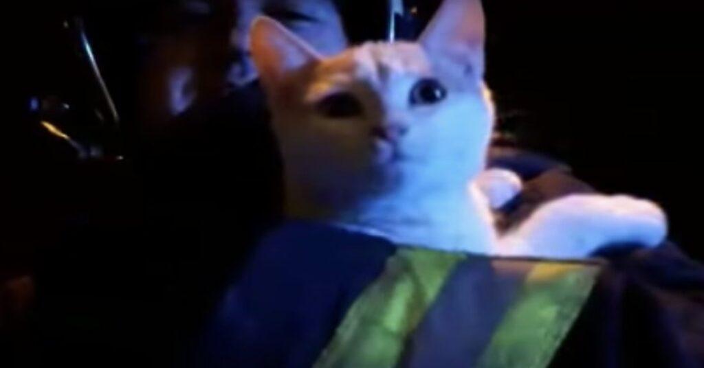 gatto salvato dai vigili del fuoco